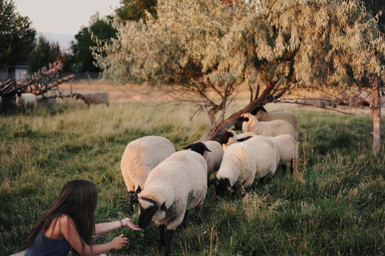 Karina and the Sheep, 2010