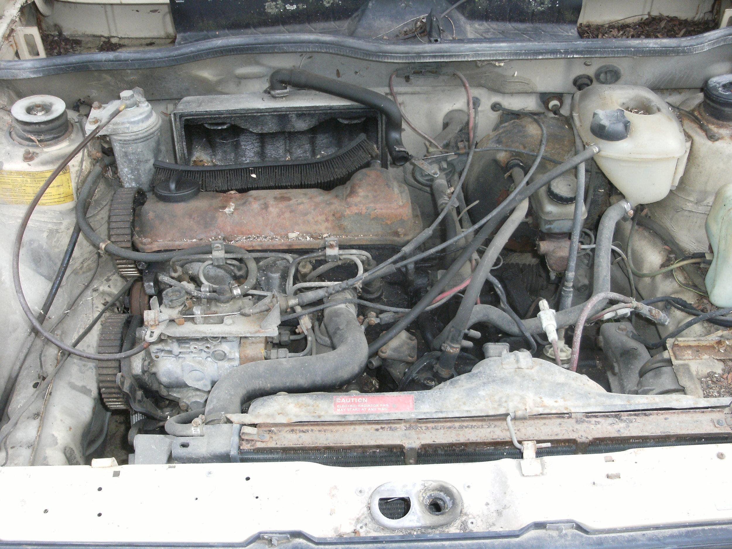 rabbit diesels 007.JPG