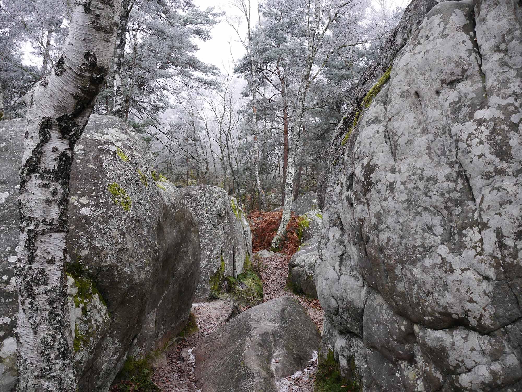 7_Fontainebleau_LocalLegends.jpg