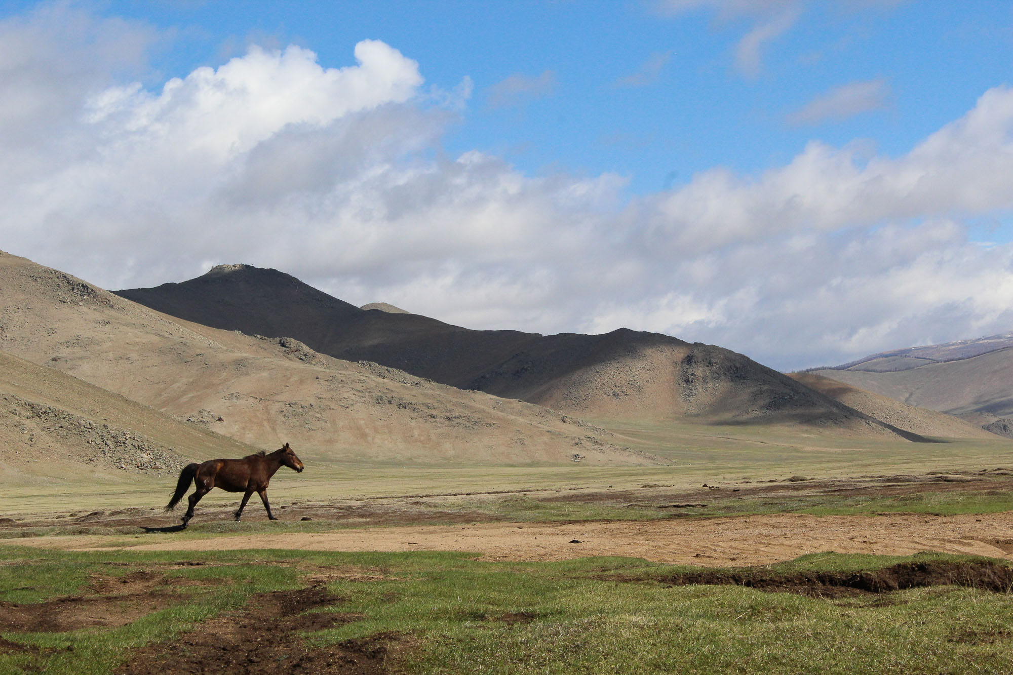 Singing is important in Mongolia. The horsemen sing to praise their horses.
