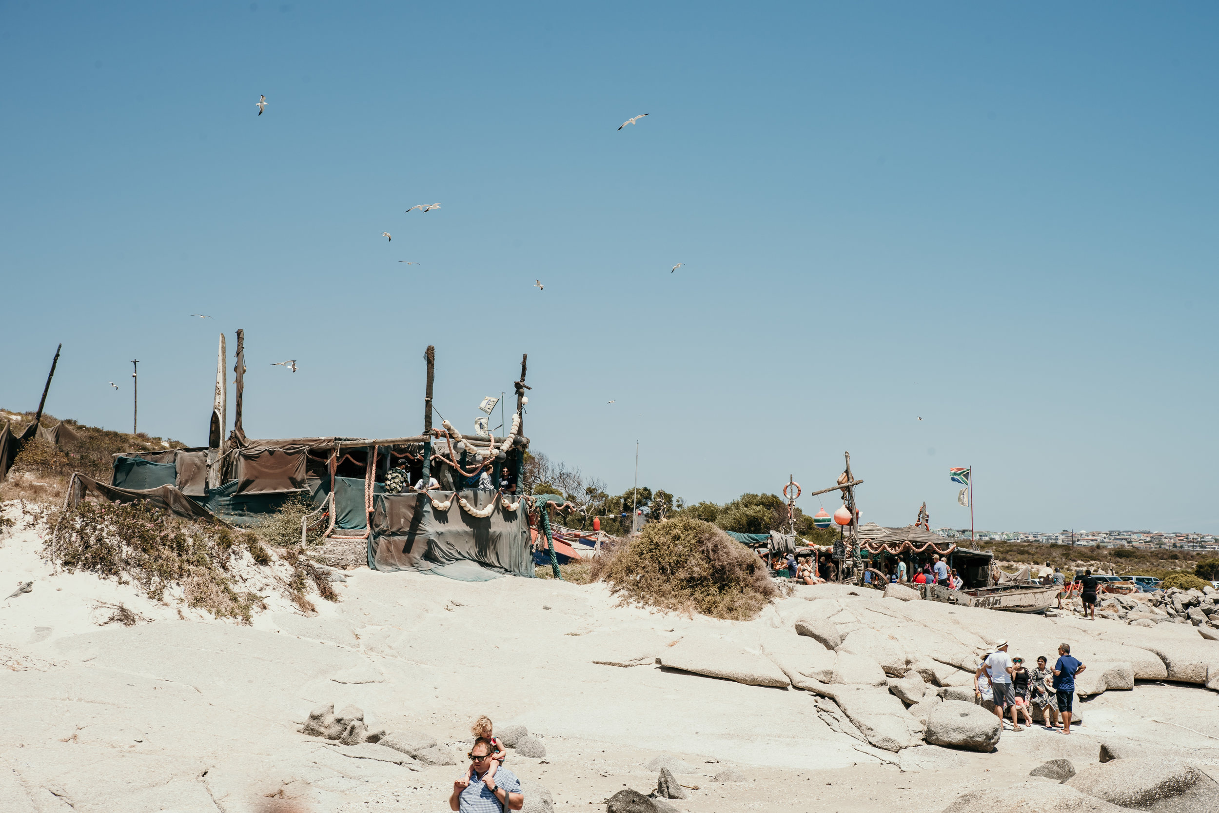 Gulls Paradise