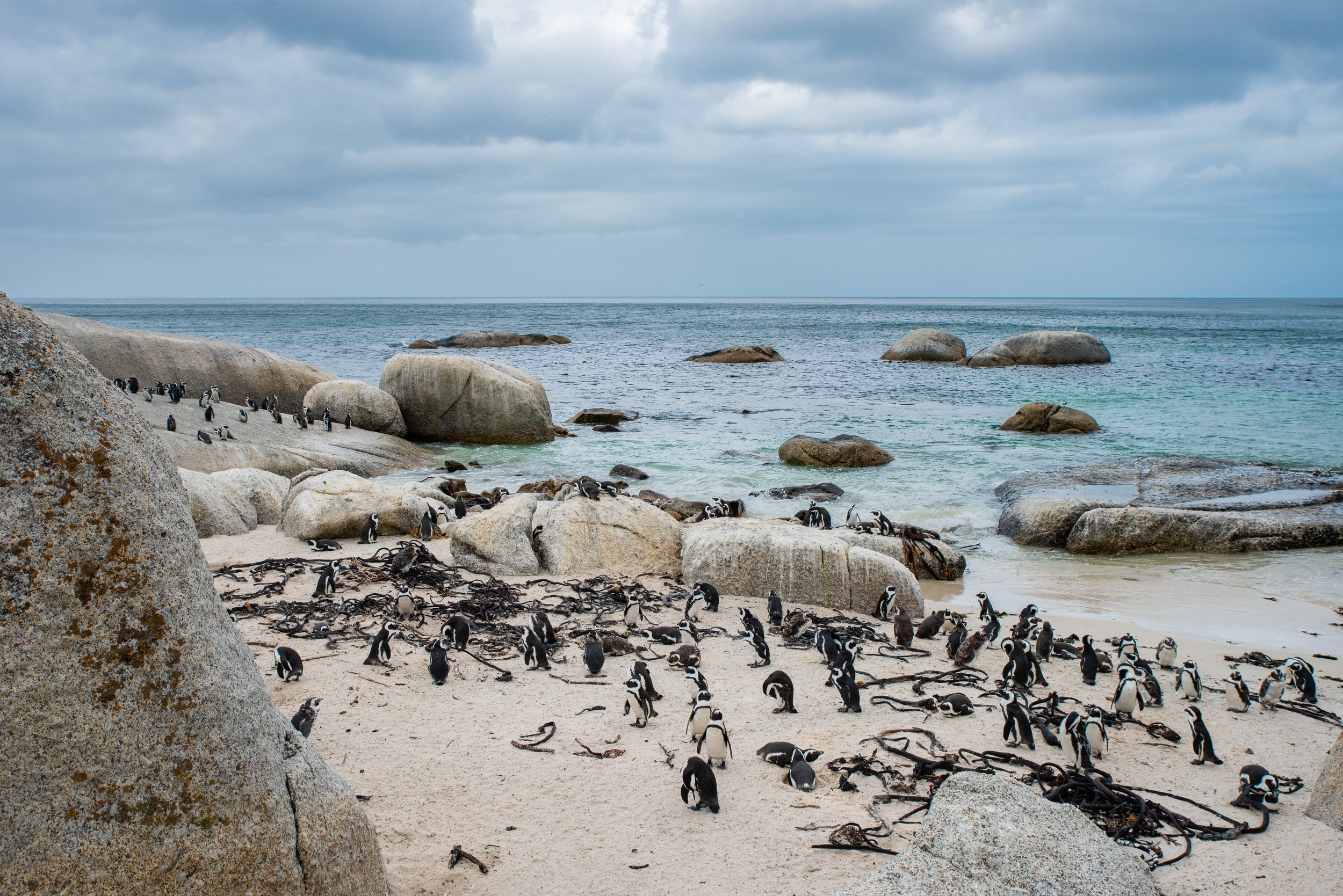 Wild Penguins