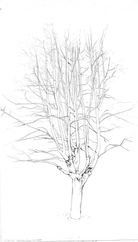Design-Drawing-of-Survivor-Tree2-583x1024.jpg