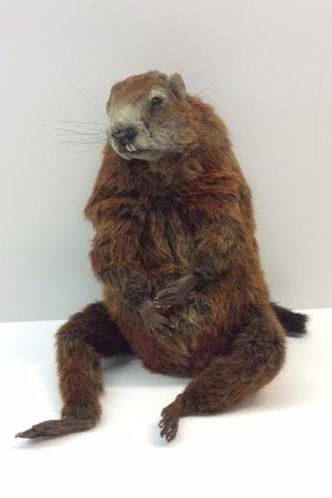 Groundhog, Groundhog Day