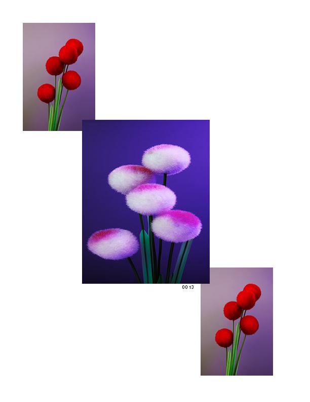 Flowers 4_1075x825_0314156.jpg