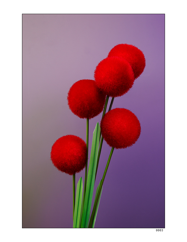 Flowers 4_1075x825_0314155.jpg