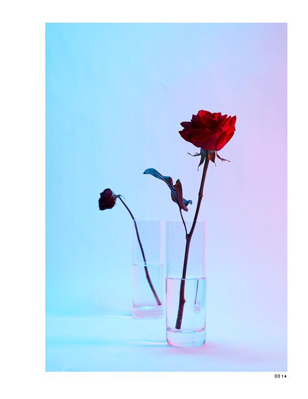 Flowers 4_1075x825_0314159.jpg
