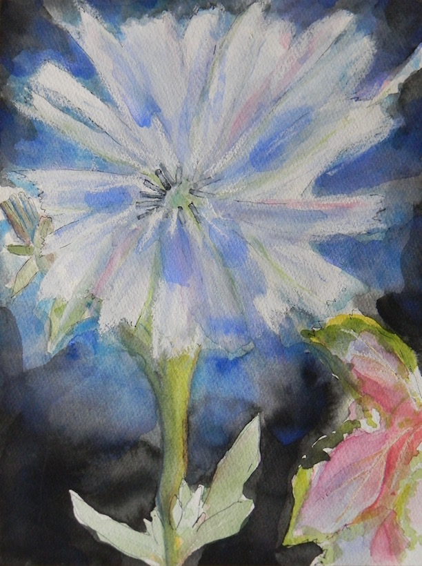 chicory flower 9x12 sold