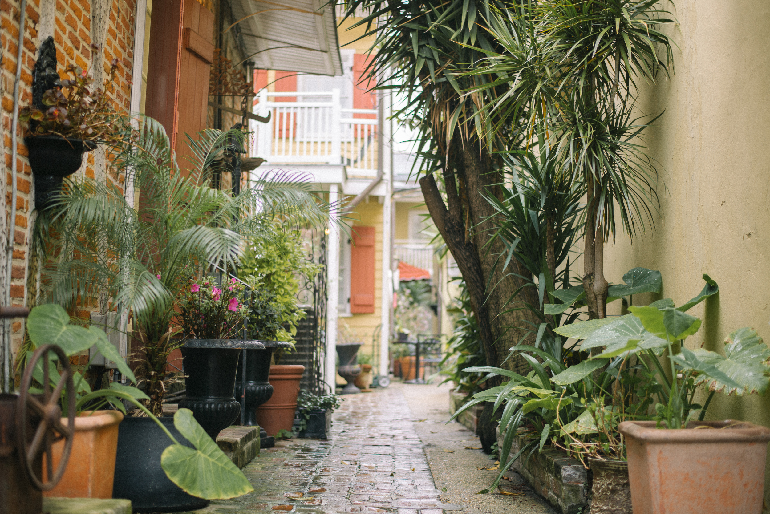 new-orleans-travel-garden-plants