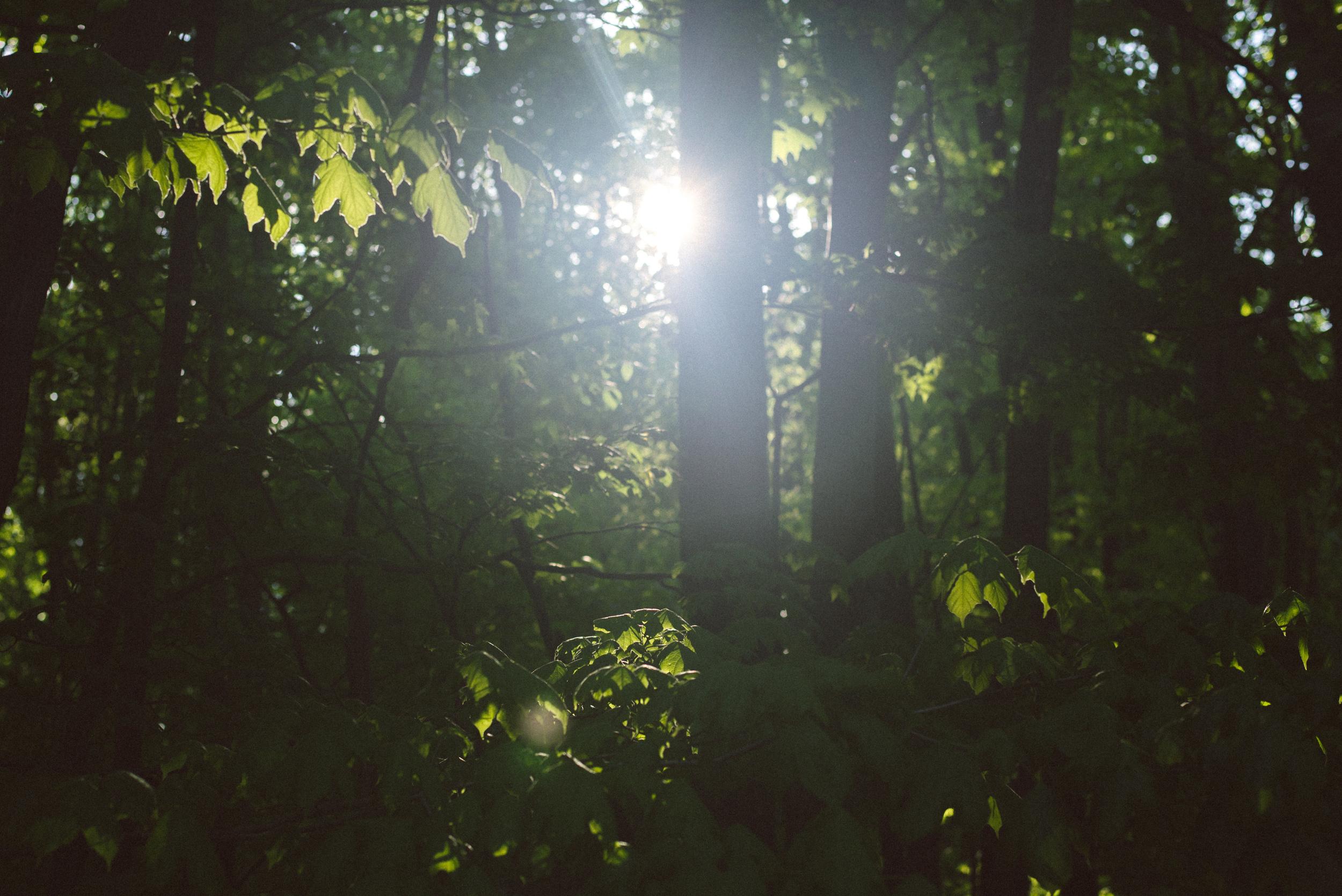 trees-sun-green-summer-natural-light