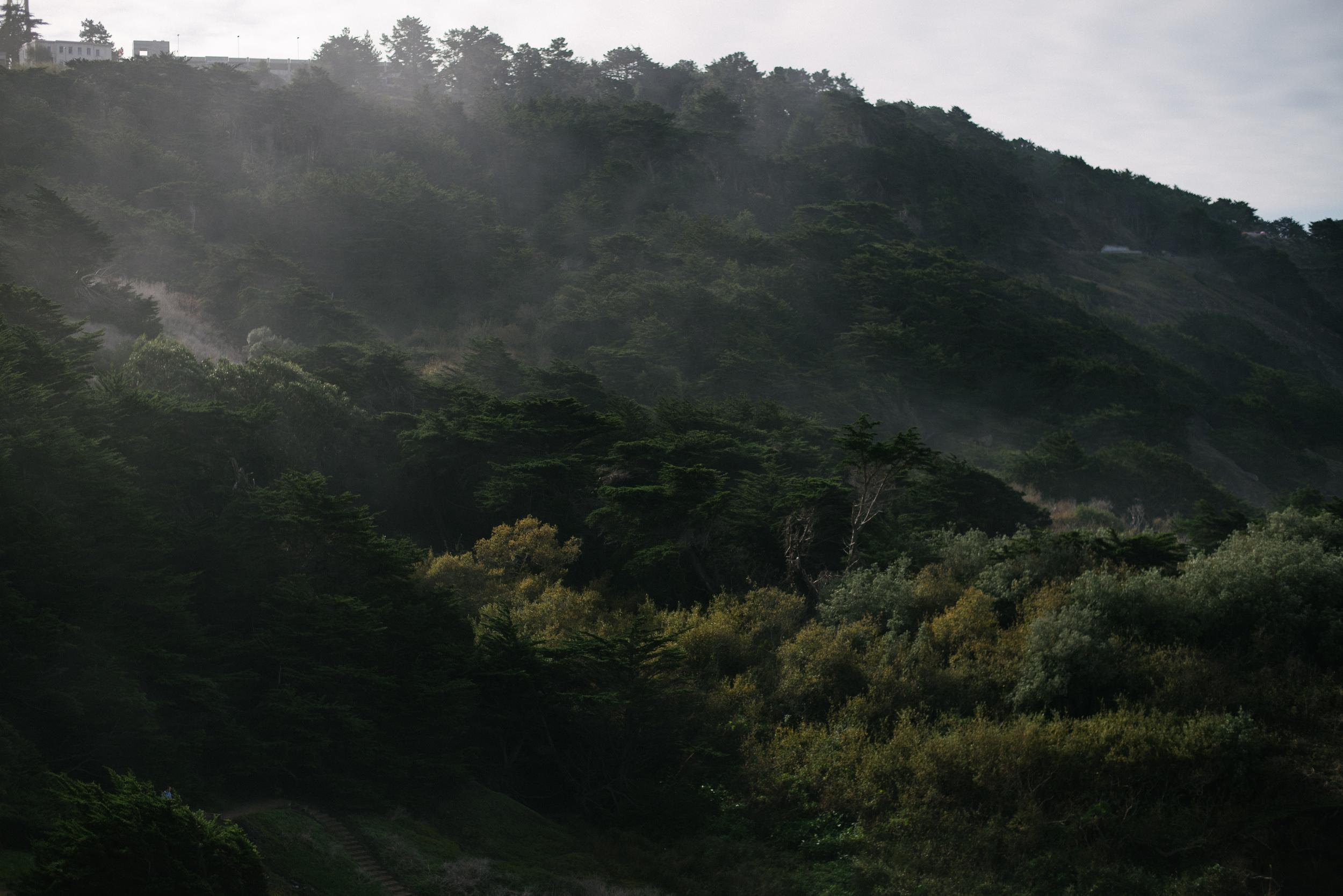 California-travel-outdoors-fog-trees-nature
