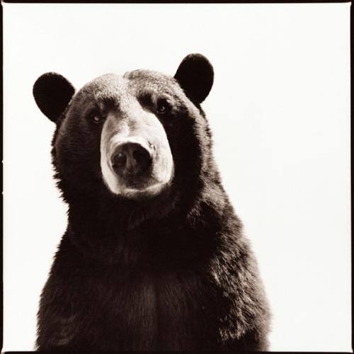 Black Bear-I