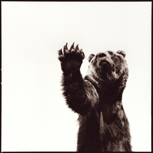 Grizzly-I
