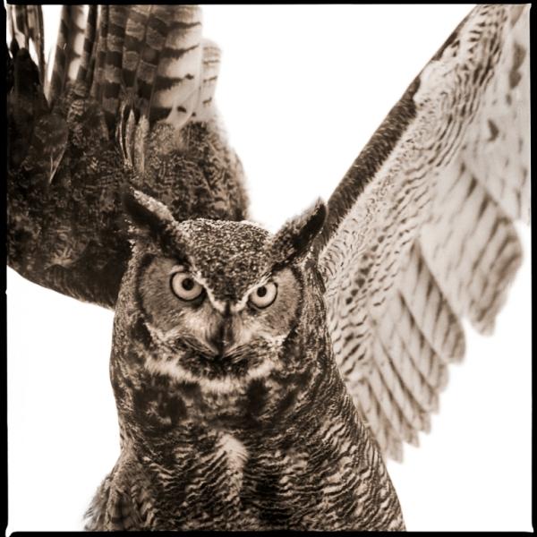 Owl-VI