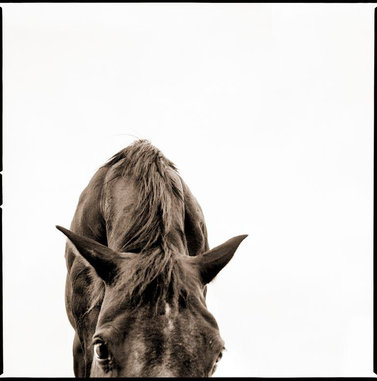 Francois_Horse 2e.jpg