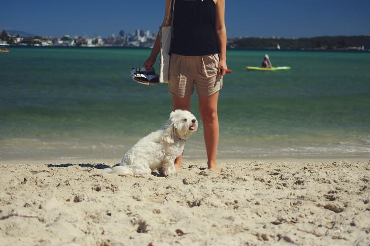 Rose Bay Dog Beach Liv Life Mag.jpg