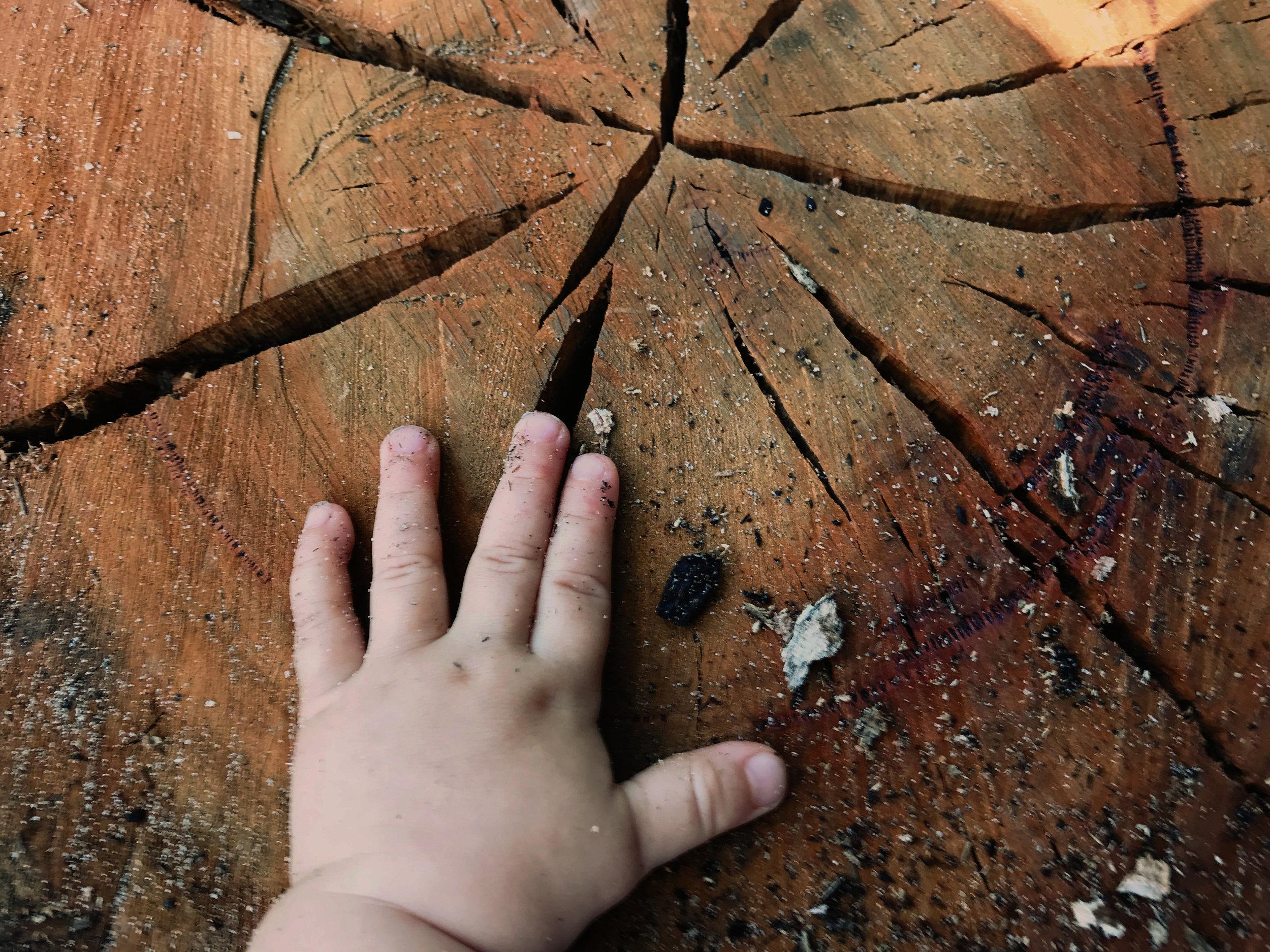 wildplay cenntennial park 04.jpg