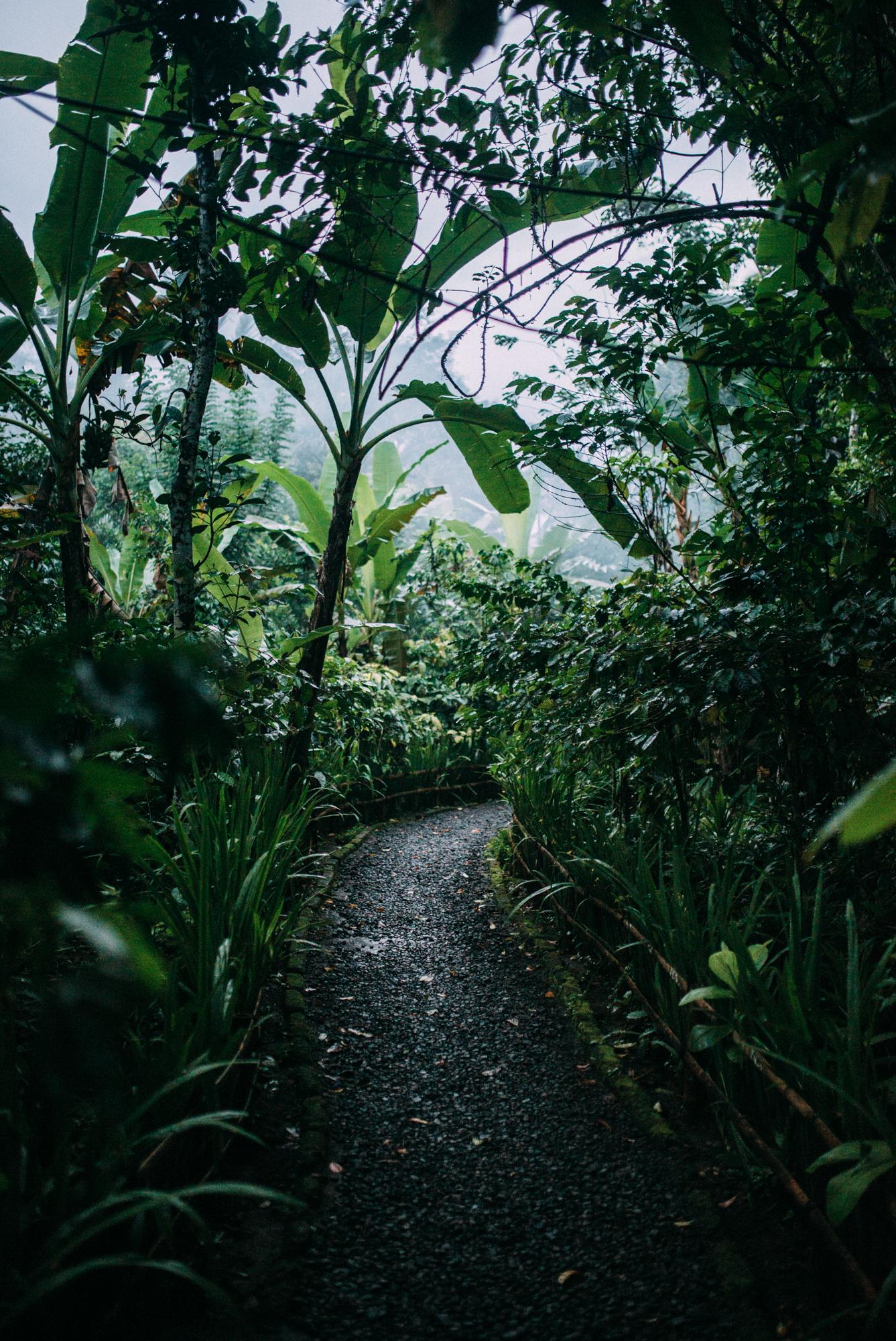 Bali-Travel-Web-8.jpg