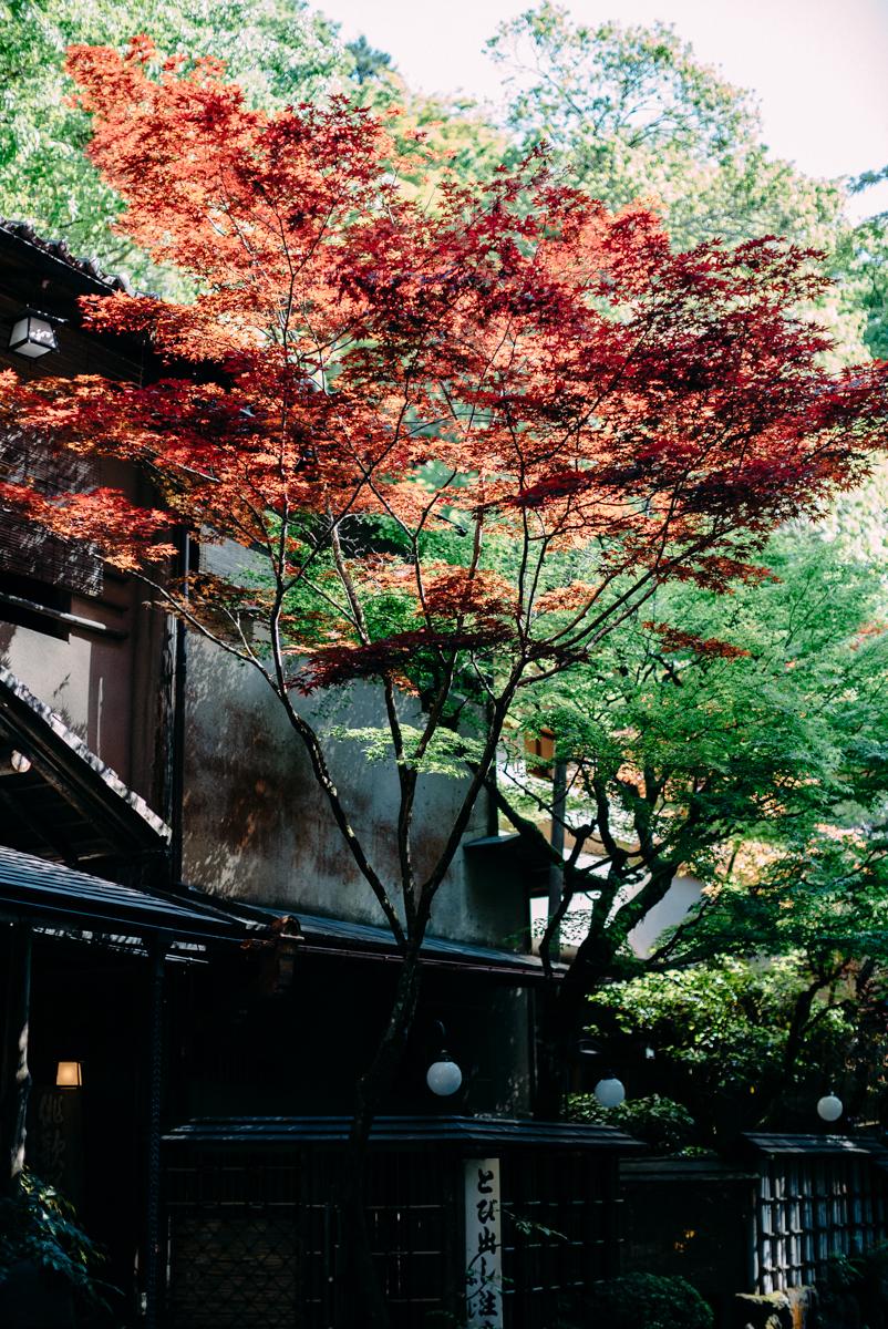 PhilipNix-Japan-Kyoto-25.jpg
