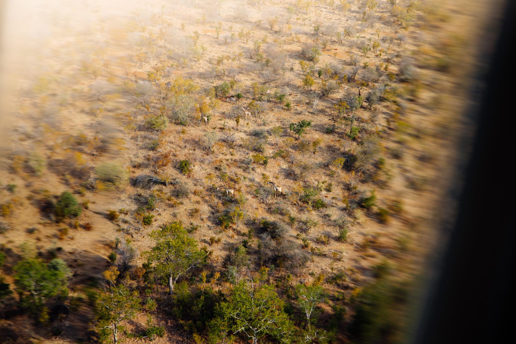 Victoria-Falls-Safari-2.jpg