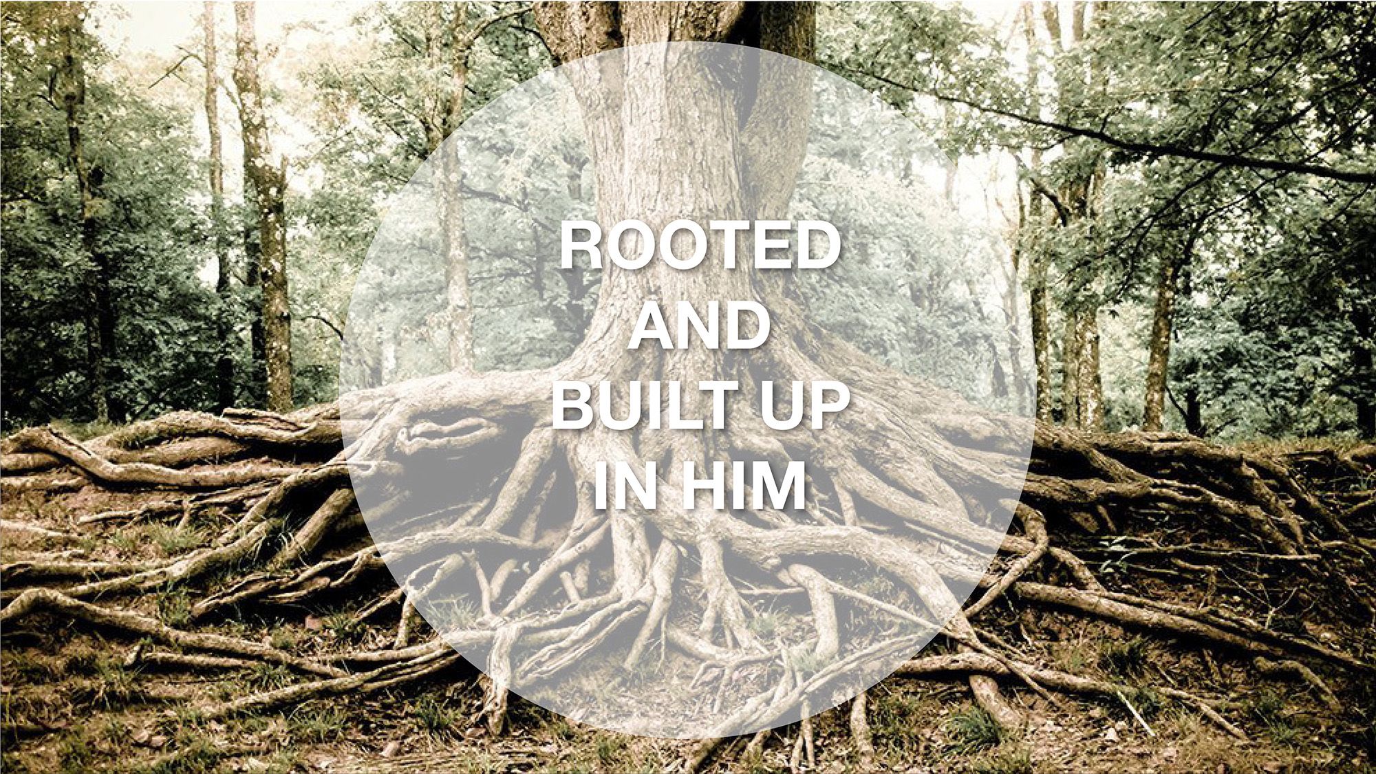 Colossians_Rooted_Web.jpg