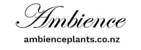 Copy of Ambience