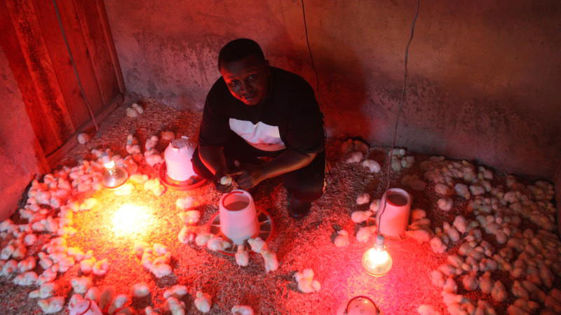 William Mutua, a poultry farmer in Tala, Machakos County, says he has lost less than ten chicks since he ventured into poultry keeping, thanks to Digital Smart Brooder. [David Njaaga, Standard]