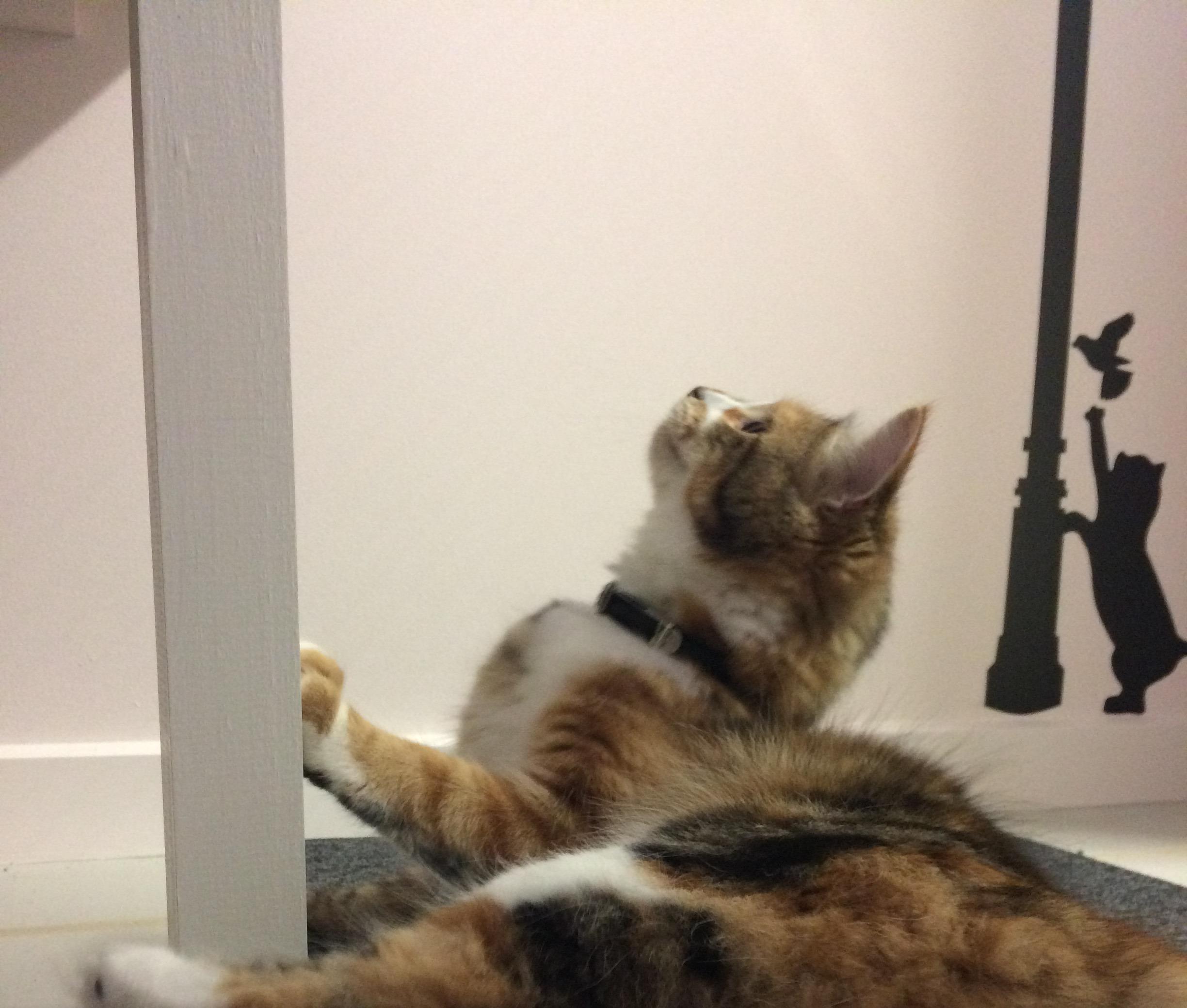 best cattery Geelong Melbourne Cattery.jpg