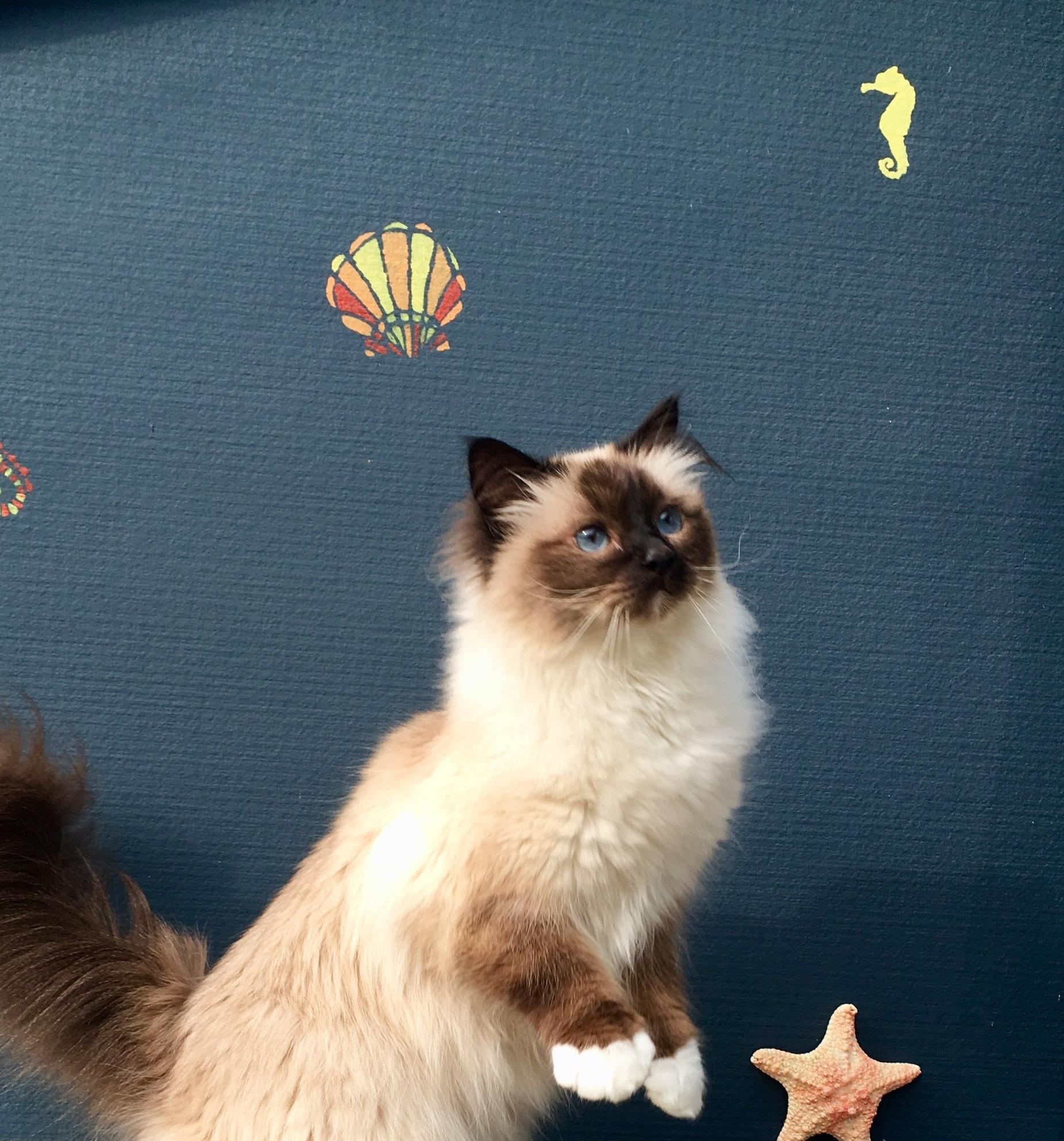 Geelong Cat.JPG