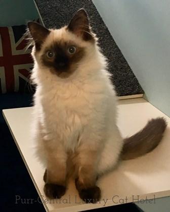 cat boarding Beau