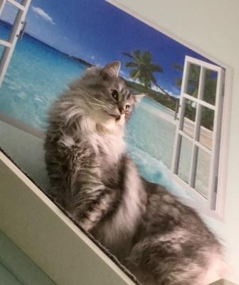 cat hotel Shadow