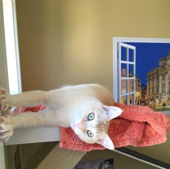 cat daycare Simon