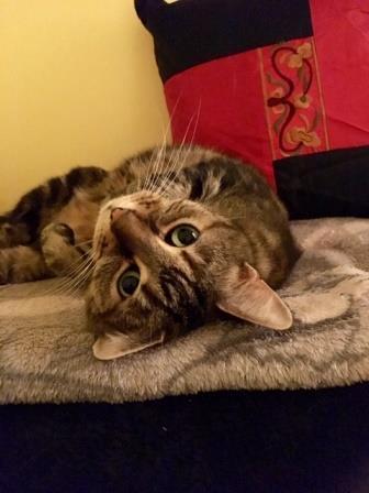 cat sitter 1.jpg