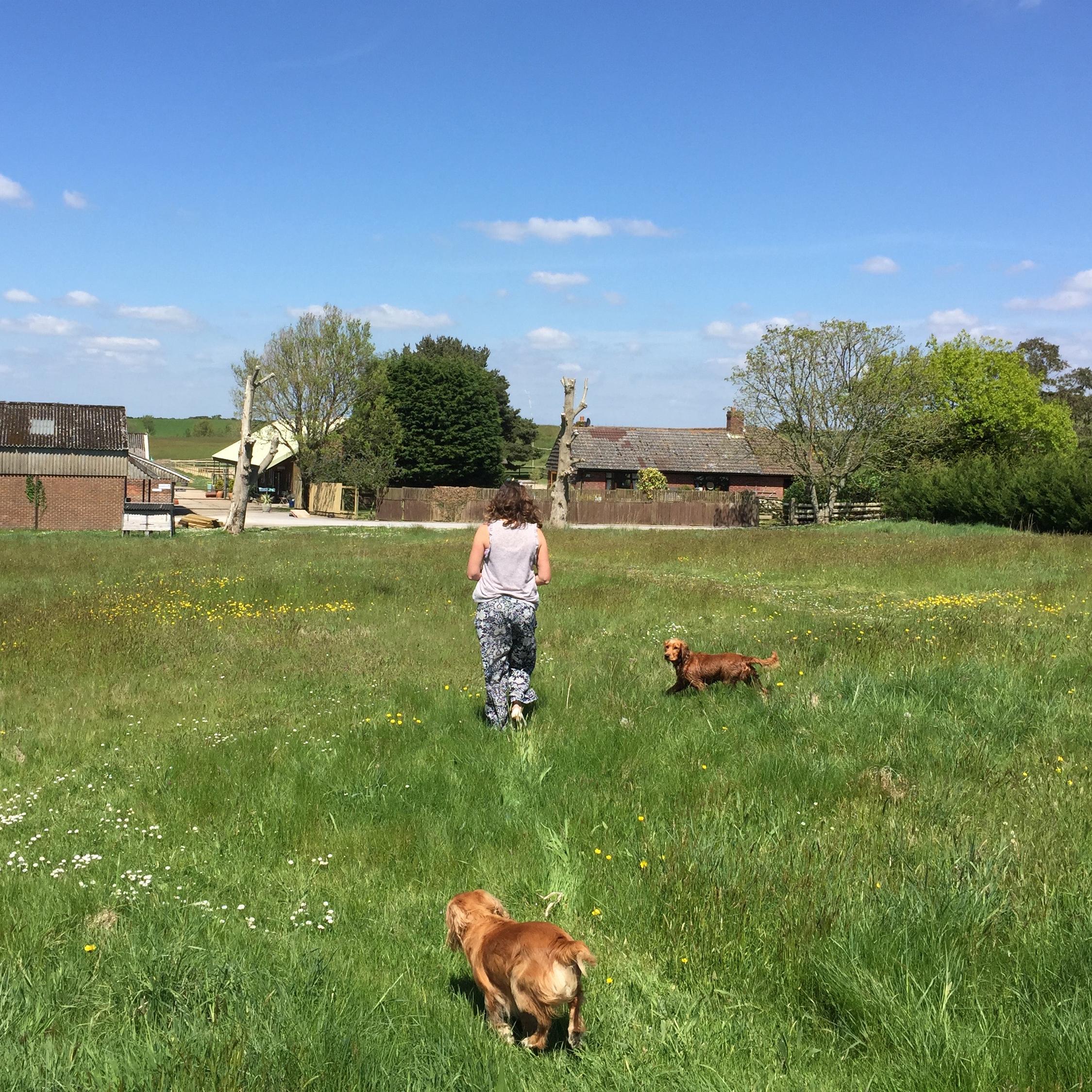Hartland Stud - dog friendly.jpg
