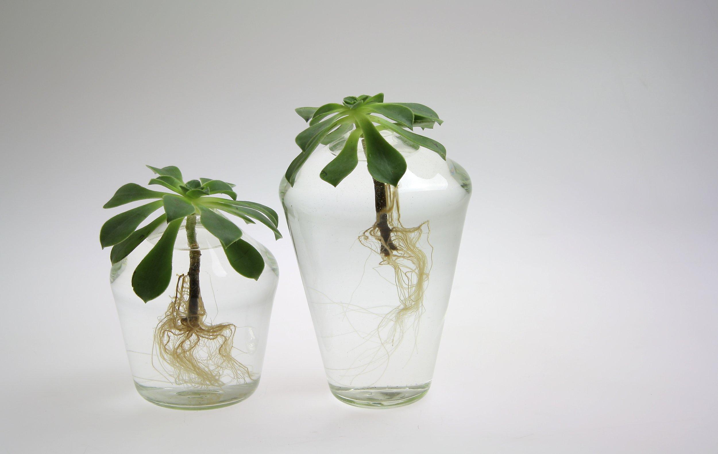 Succulent Vases, 2015
