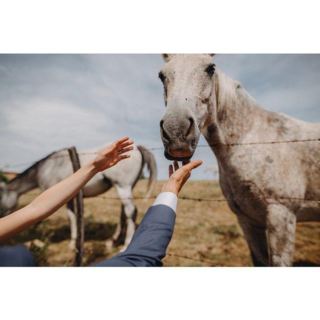 Las bodas en Francia 🇫🇷 molan mucho, sobretodo si tu compañera de aventuras es @geometry_love 🤙🏻 #bodasconestilo #organizaciondeeventos #weddingplanner #luxuryweddingplanner #fotografodebodas #fotografosdeboda #mypwedding #wedding #luxurywedding #sunshine #shotkit #weddingphotography #weddingplannerspain #bodafeurope #junebugweddings #rangefindermagazine #horses #bodaenelbosque #vestidosdenovia