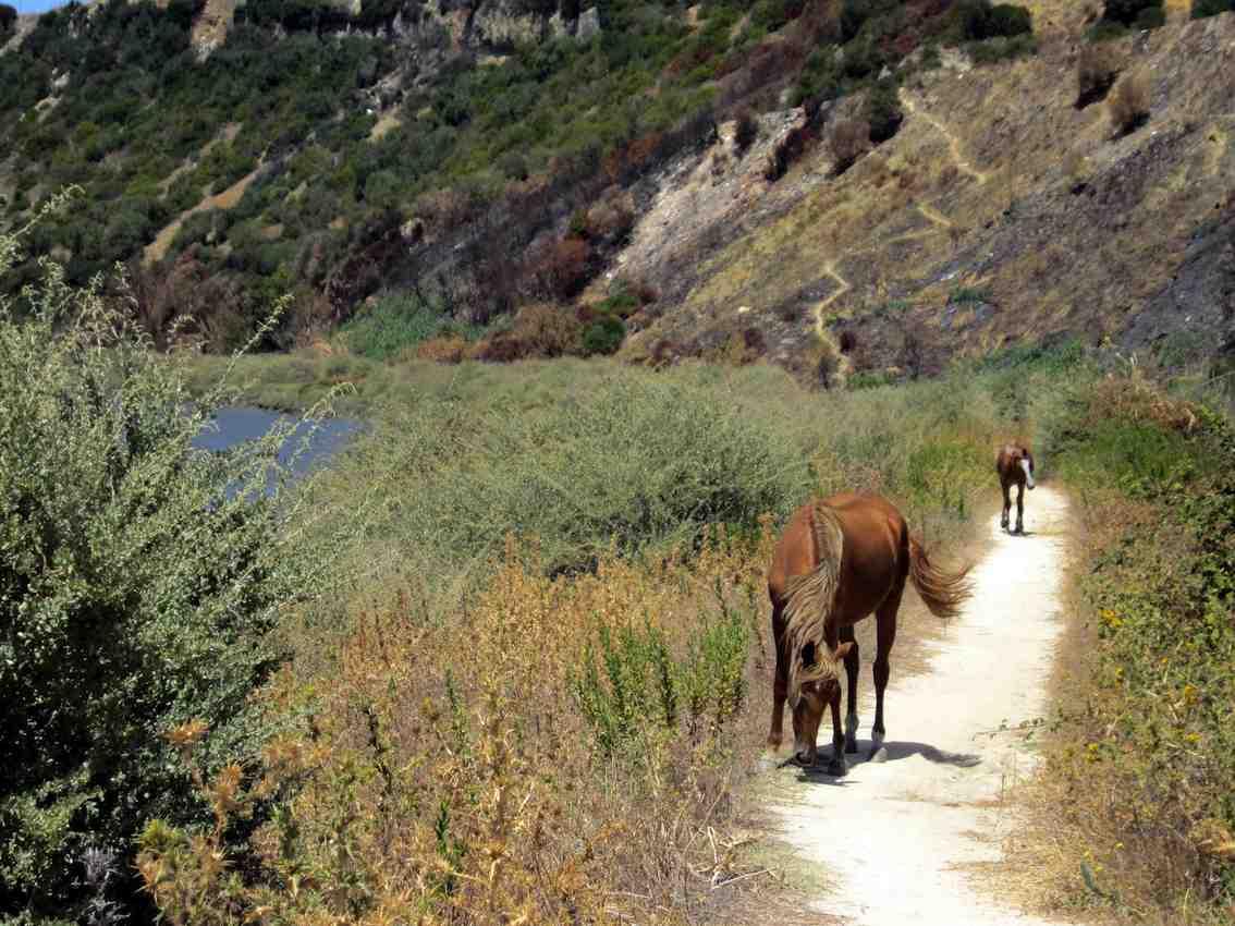 camino portugal horse trail.jpg