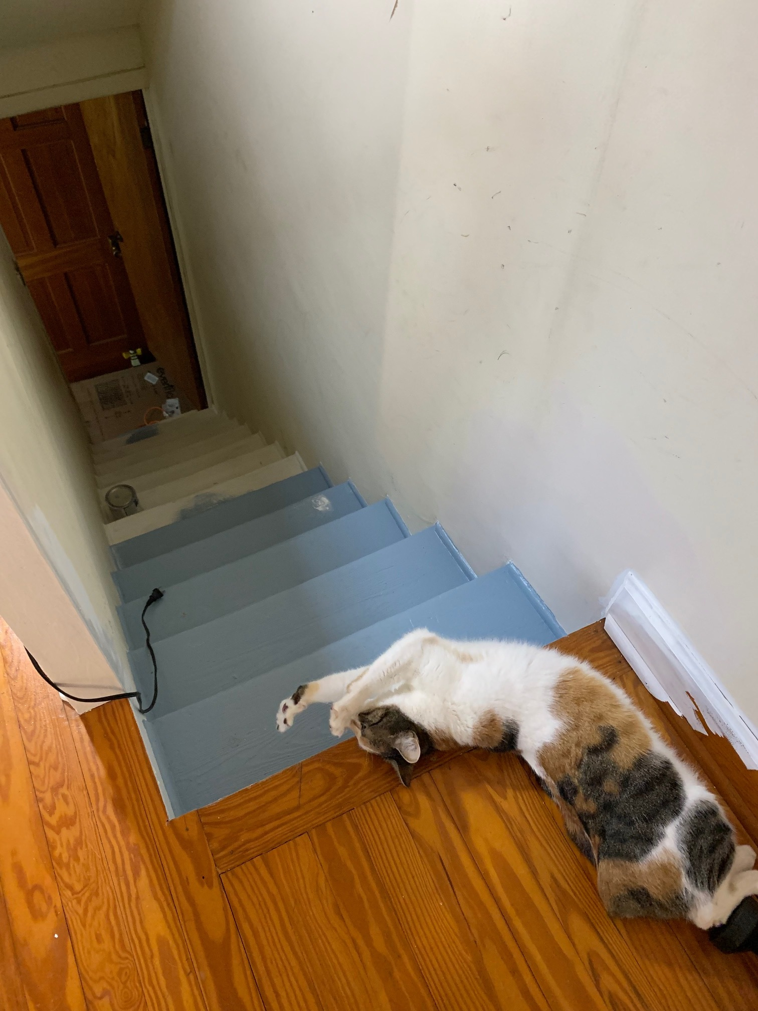 That's Alia Atredes, tailless wonder, at the top of the narrow staircase … which I really love (architecture and quadruped) … until it's time to schlep large furniture upstairs!
