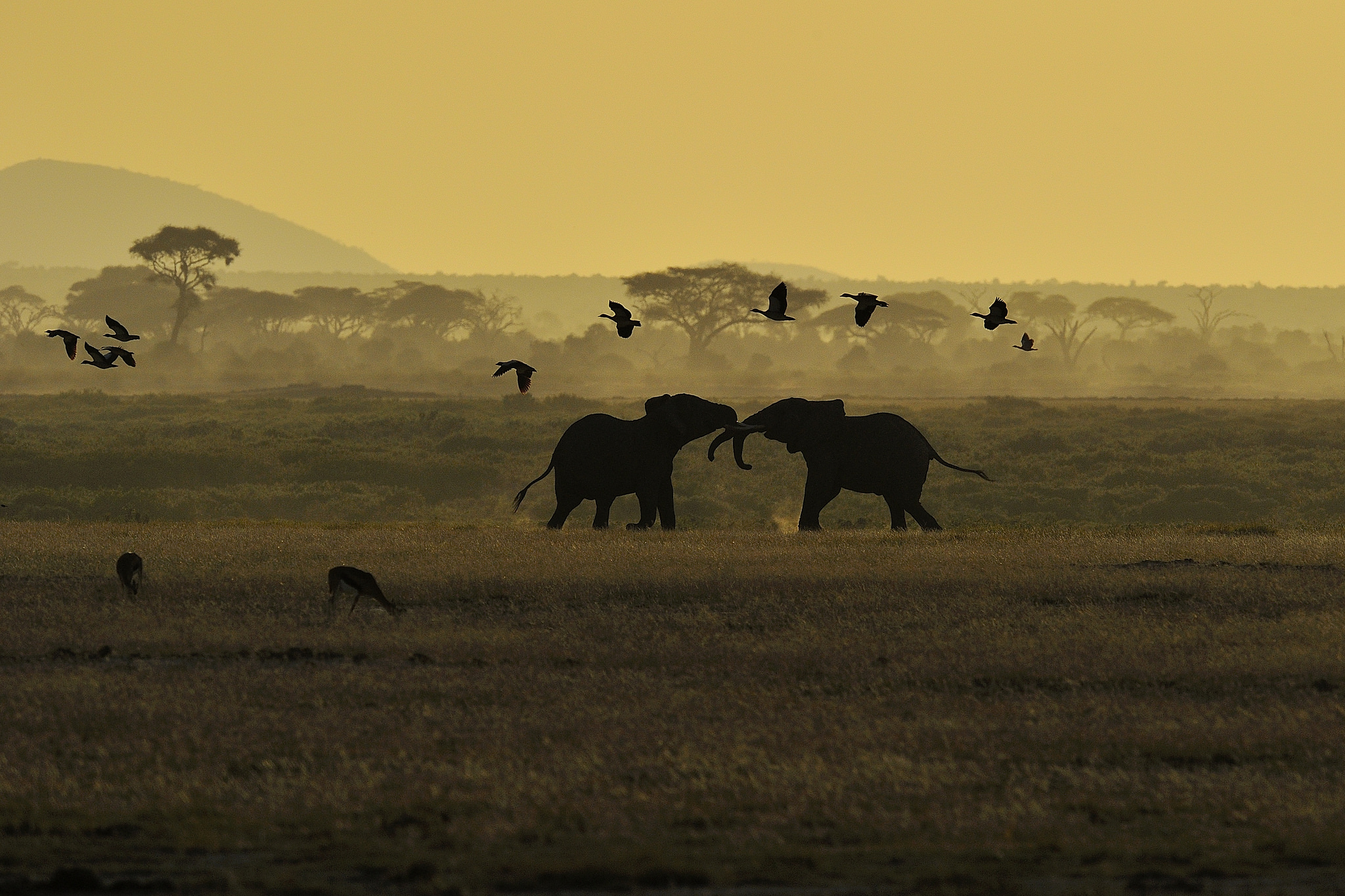 It is thought that most of human evolution took place on a grasslands environment, but how does that affect learning and memory today? Image by  Diana Robinson .