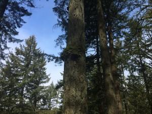 Tree Spirits Home