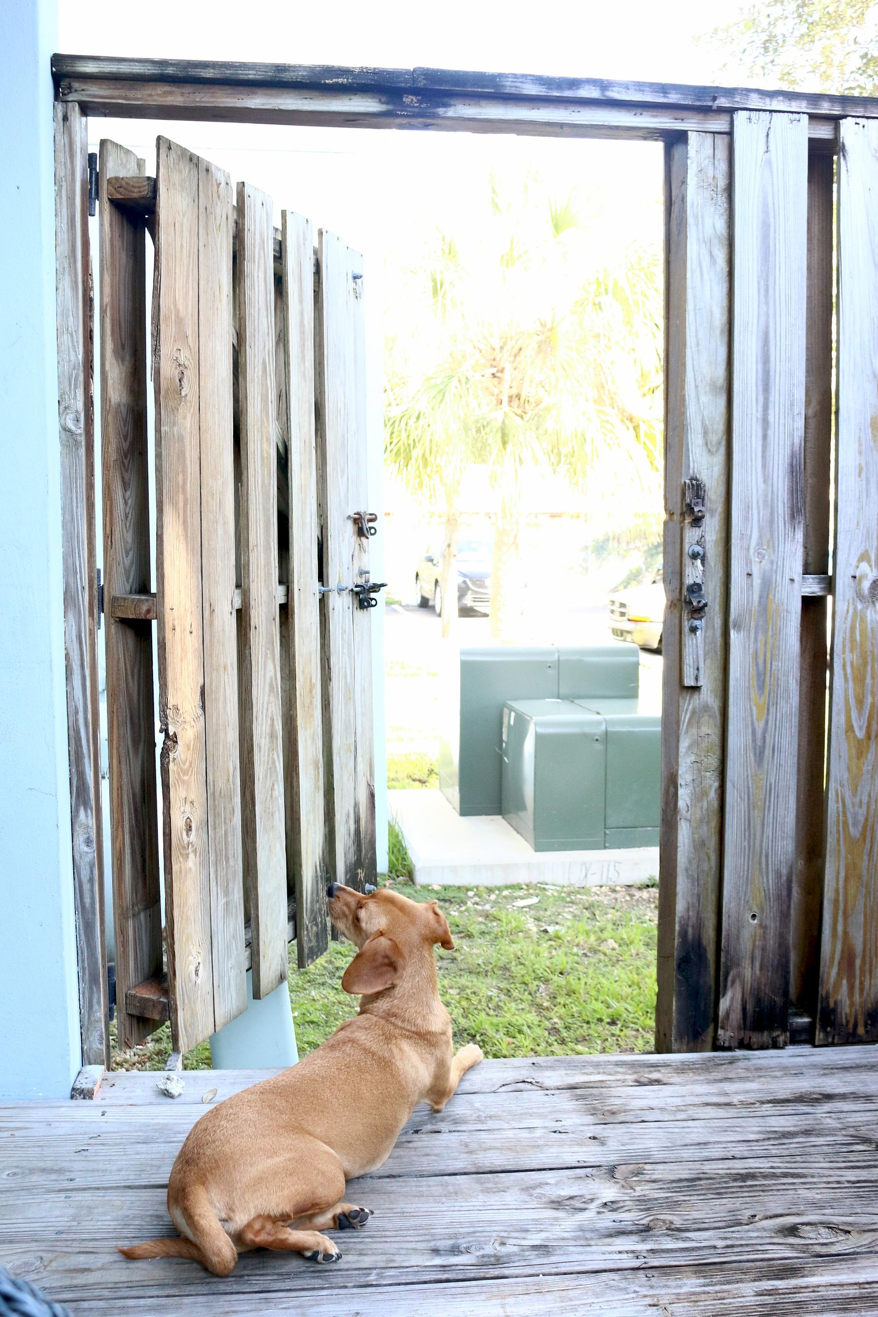 Nyah Open door.jpg