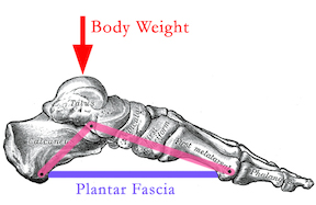 body weight distribution through foot