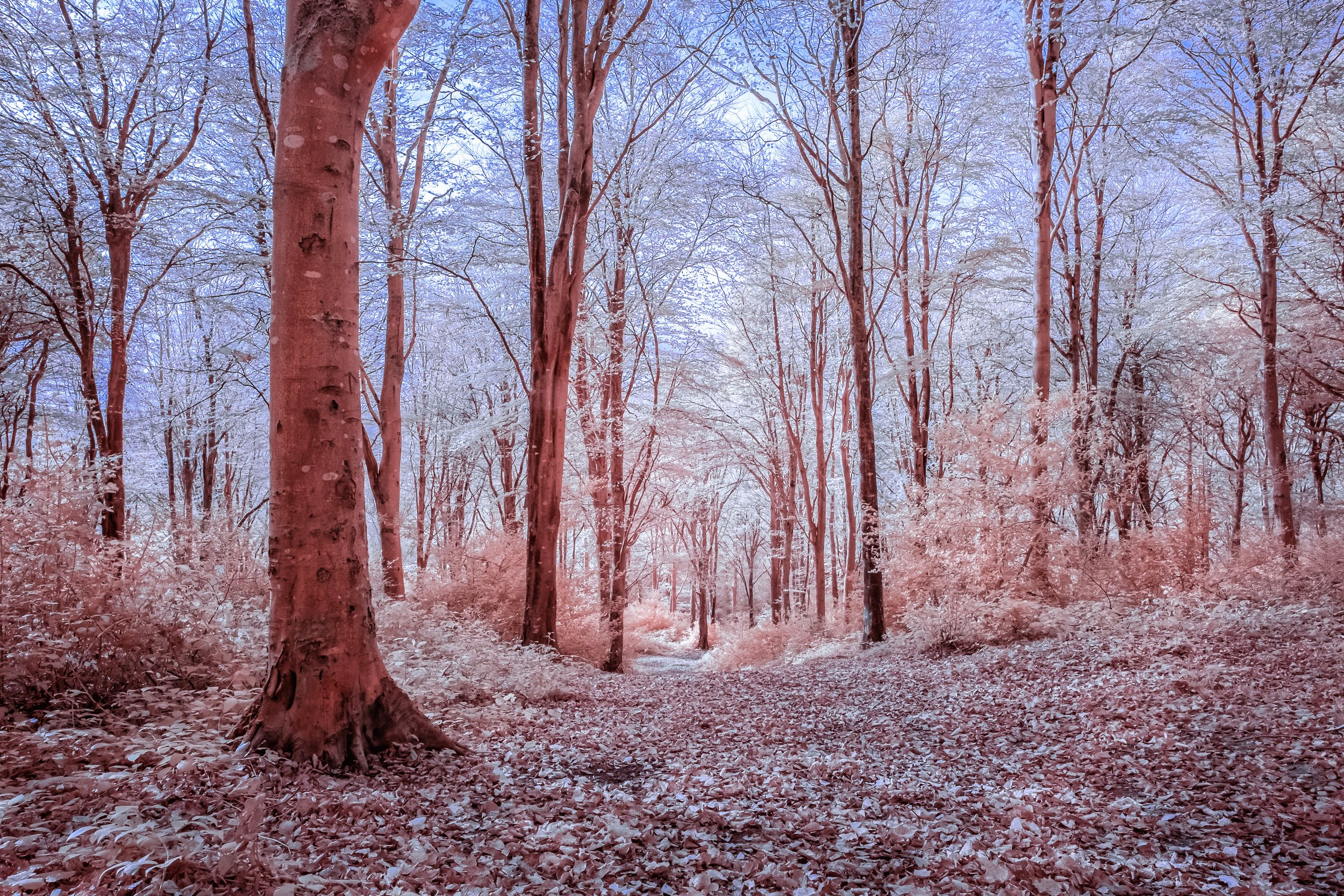 Idless infrared 5 Flickr low .jpg
