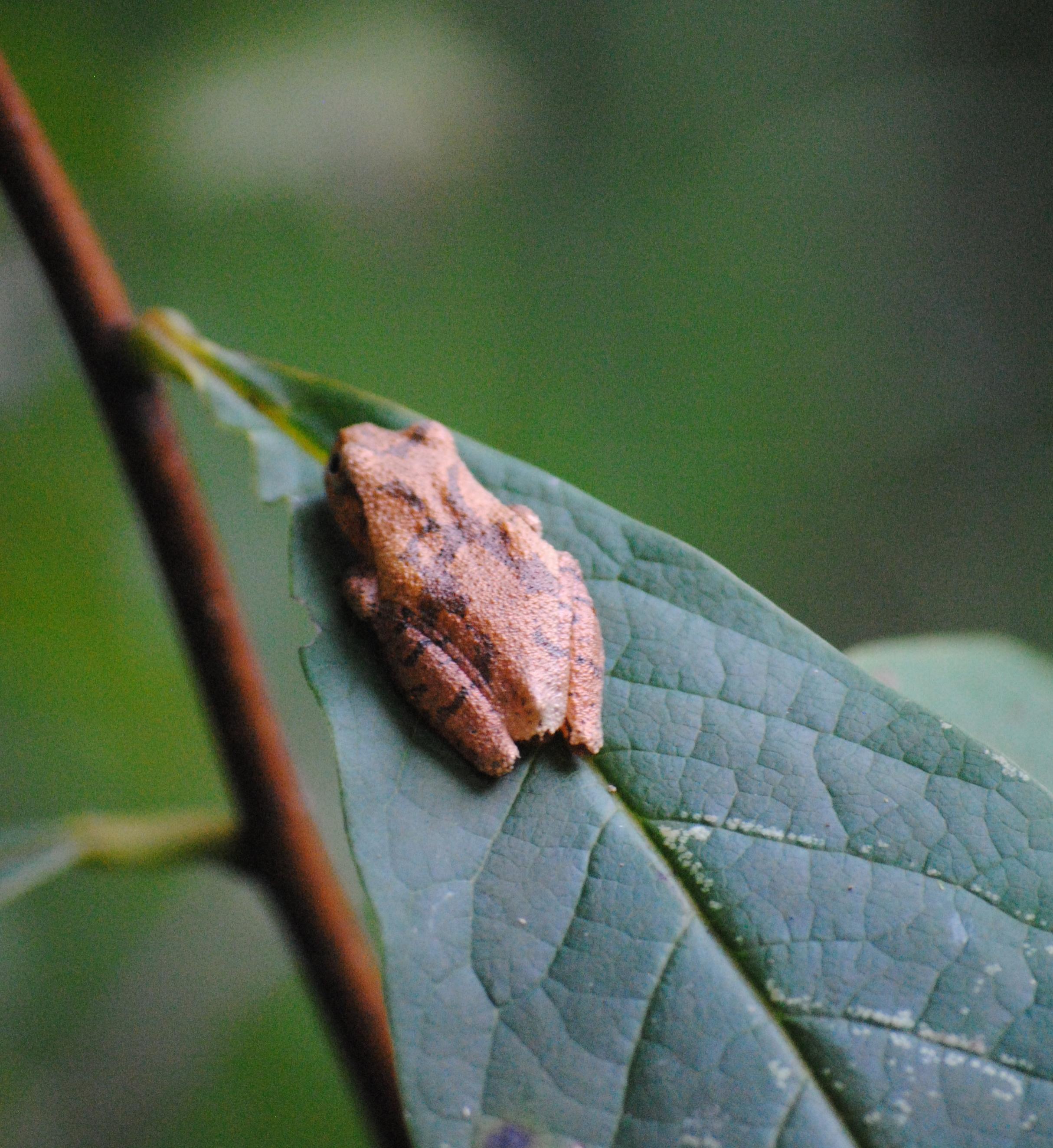 On a pawpaw tree leaf.