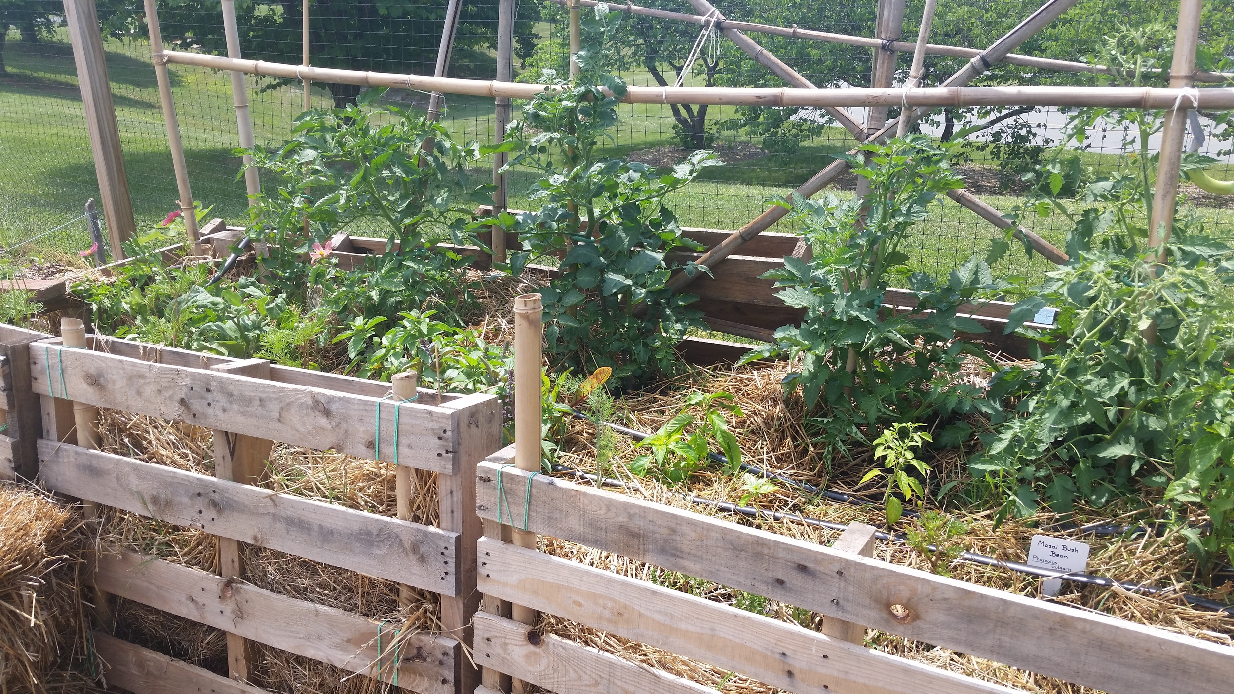 Strawbale garden with pallets used for greater structural integrity.