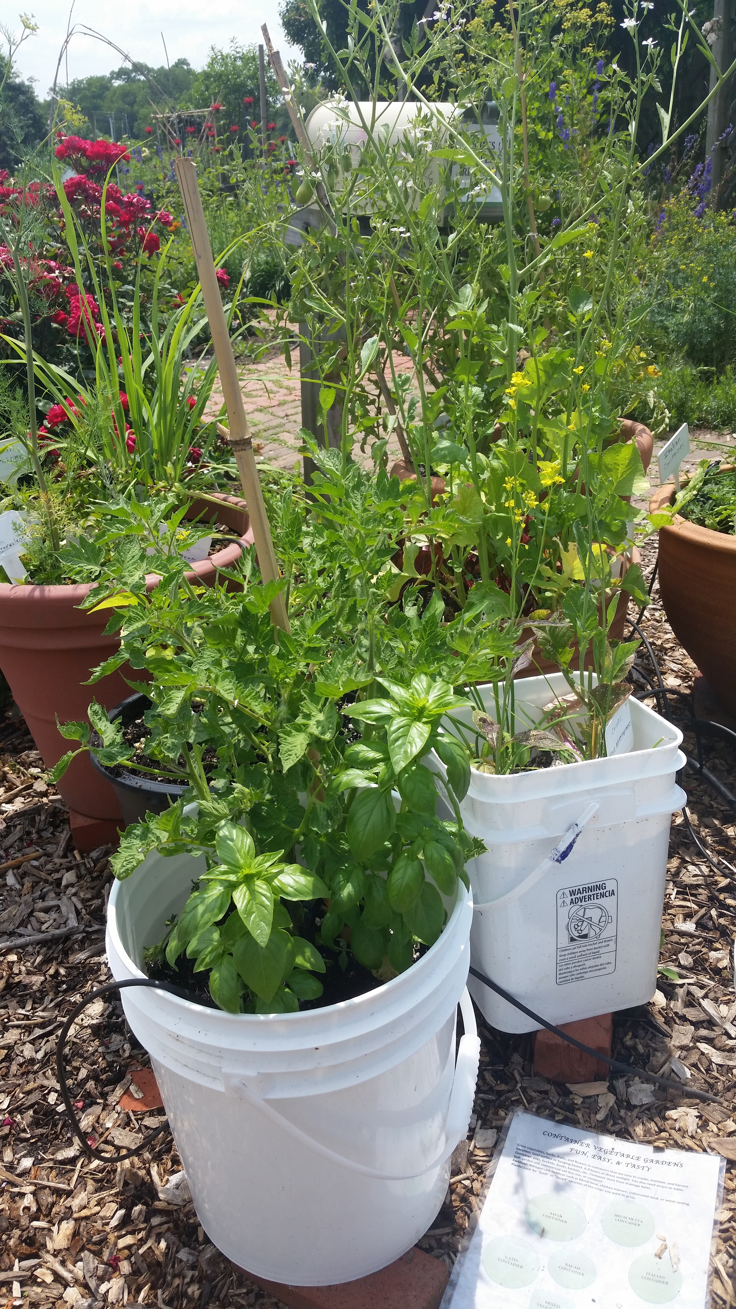 Even with no more than recycled containers you can create a patio or balcony garden. Be sure the recycled containers are safe to use as food growing containers.