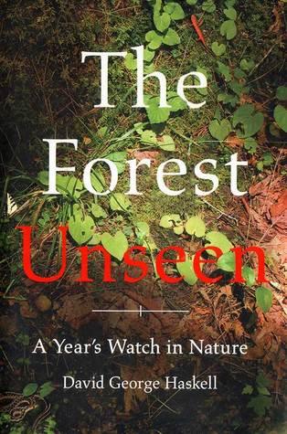 forest unseen.jpg