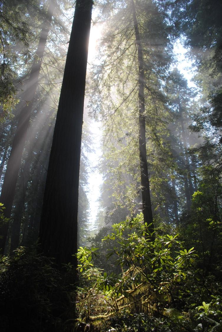 light in trees.jpg