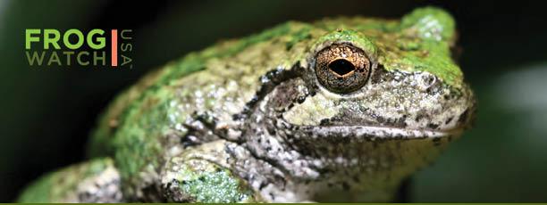frogwatch-banner (1).jpg