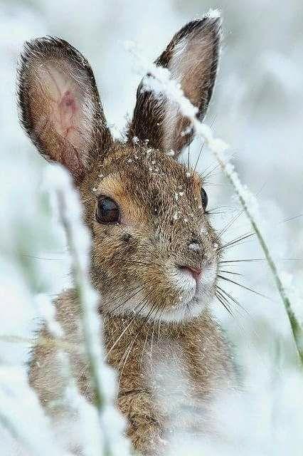 bunny in snow, teresa correia.jpg